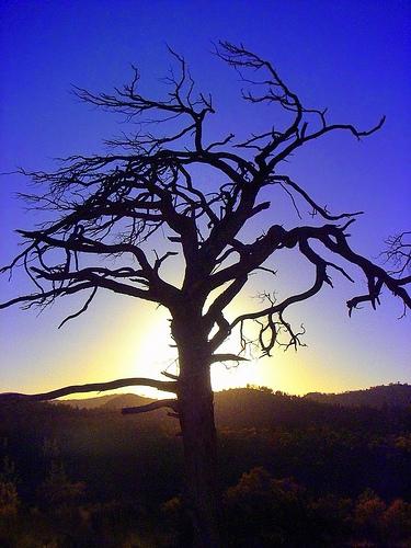 tshoot tree